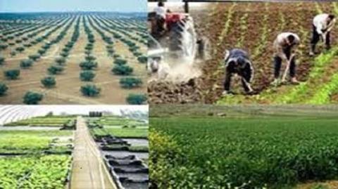 agriculture_tunisie